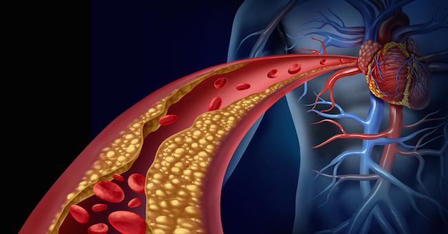 Cordyceps rafforza le funzioni sessuali anche nell'impotenza e abbassa il Colesterolo
