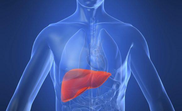 Il fegato il nostro laboratorio chimico. Ecco come ripulirlo