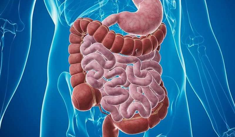 Intestino:La sindrome da tossicità intestinale