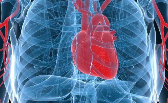 Auricularia, Cordyceps e Reishi sono rimedi naturali eccellenti per le coronarie