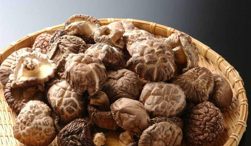 I funghi medicinali contengono decine e decine di principi attivi