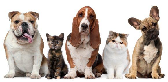 Cordyceps, Maitake, Reishi, Shiitake, Agaricus Blazei sono utili cure per gli animali