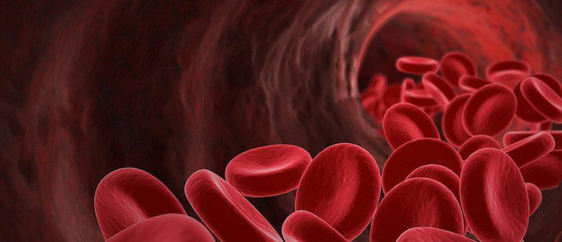 Auricularia e Cordyceps : per depurare il sangue e proteggere il sistema cardiovascolare