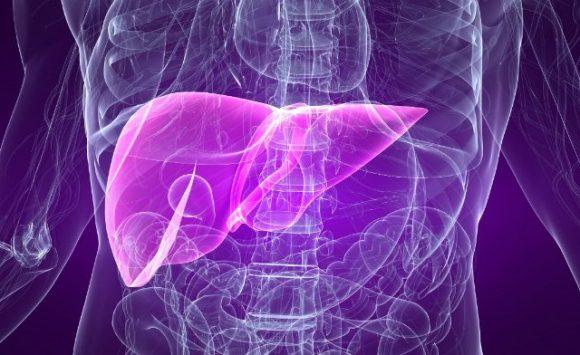 Il Reishi è utile contro l'Epatite Virale B e la Cirrosi