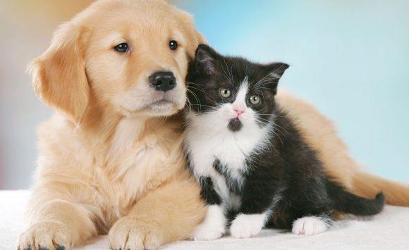 Cani e gatti, fai prevenzione con lo Shiitake