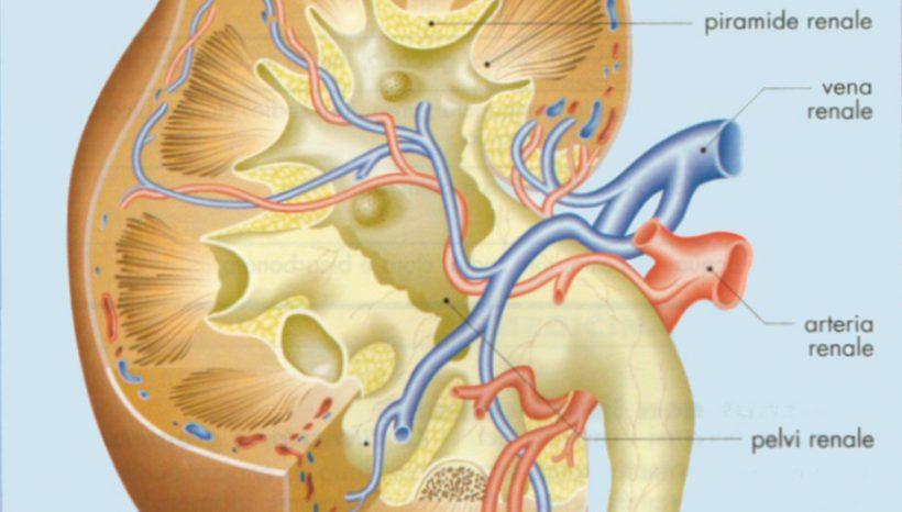 La nefrosi dà proteinuria