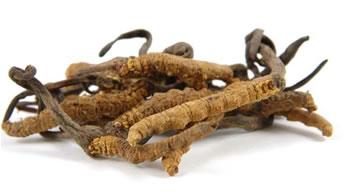 Il Cordyceps stimola la donna a produrre da sè estrogeni e progesterone