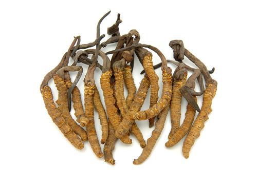Il Cordyceps rafforza la virilità sessuale maschile, di psiche e soma