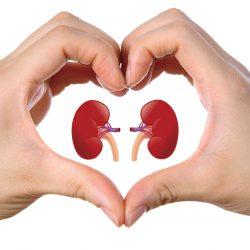 Il Reishi è utilissimo nelle malattie croniche del rene