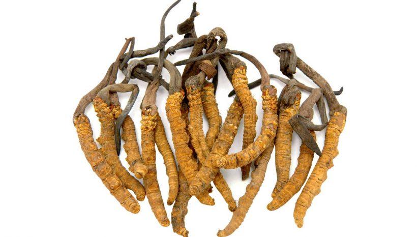 Con il Cordyceps sono meno le ricadute da Condiloma Acuminato