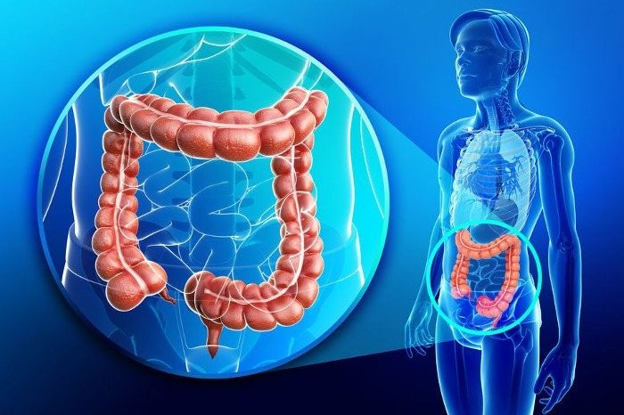 Micoterapia per tutti – cap 14  Il punto critico: l'intestino