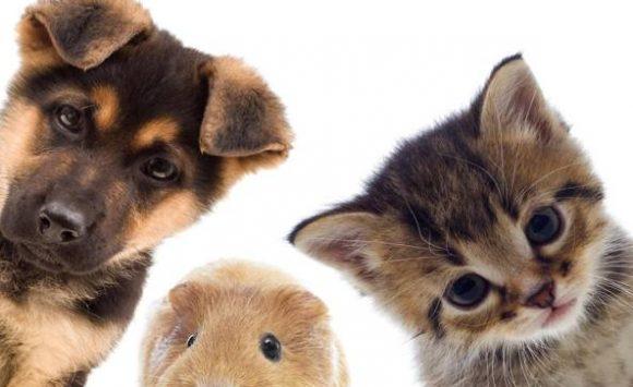 Come agisce la Micoterapia nei nostri amici animali