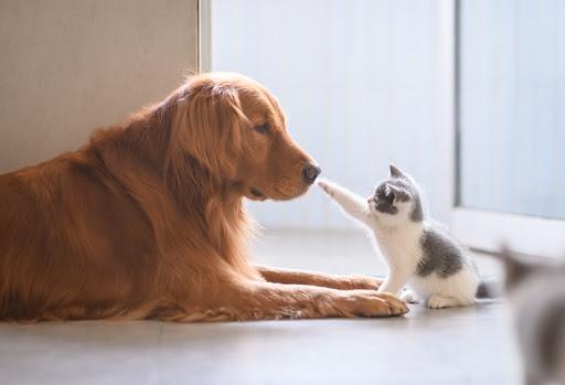La Micoterapia e i nostri amici animali