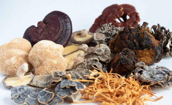 Scopri i Funghi Medicinali